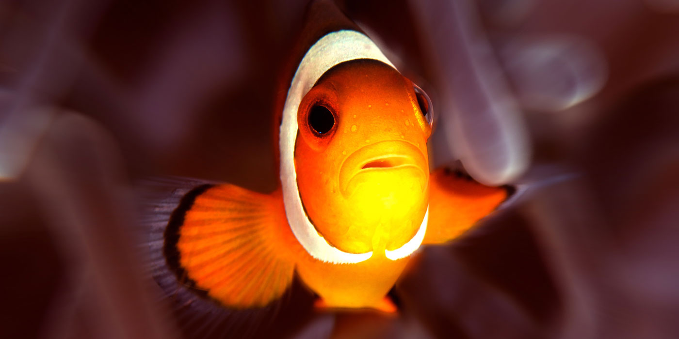 scuba-for-change-nemo